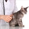 Ветеринарные клиники в Устюжне